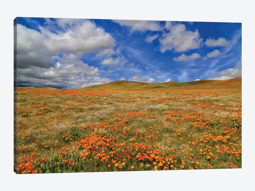 Poppies With Clouds by Susan Vizvary 1-piece Canvas Art Print
