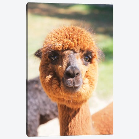 Puffy Brown Alpaca Canvas Print #SUV149} by Susan Vizvary Canvas Wall Art