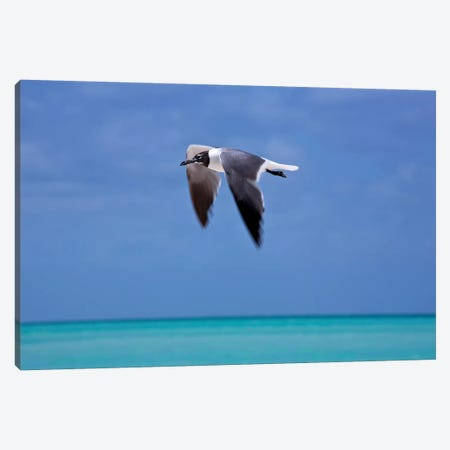Bird In Flight Canvas Print #SUV15} by Susan Vizvary Canvas Art