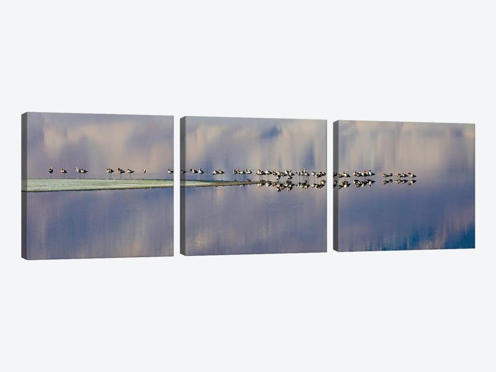 Birds On Owens Lake by Susan Vizvary 3-piece Canvas Wall Art