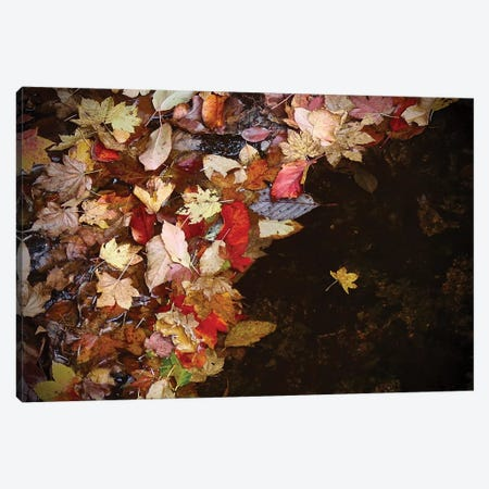 Lone Leaf Canvas Print #SUV186} by Susan Vizvary Canvas Print
