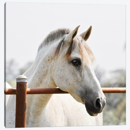 White Beauty Canvas Print #SUV197} by Susan Vizvary Canvas Artwork