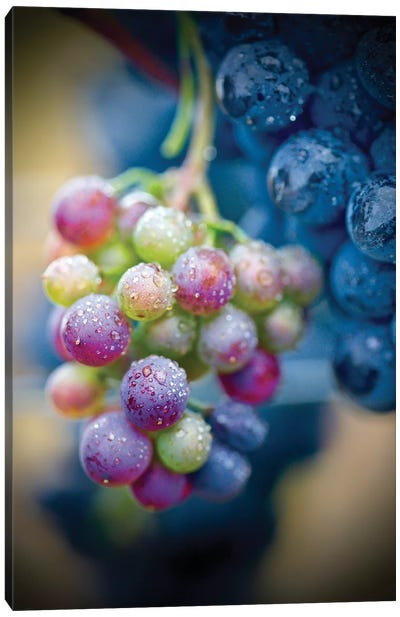 Wine Time Closeup Canvas Art Print