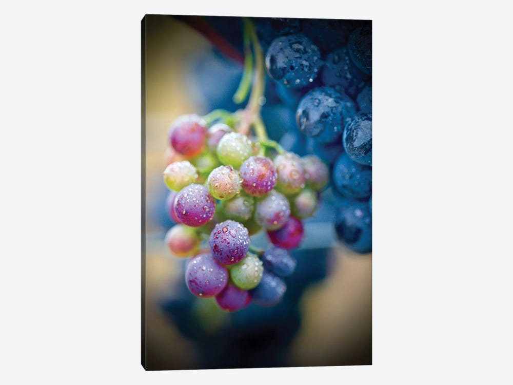 Wine Time Closeup by Susan Vizvary 1-piece Canvas Wall Art