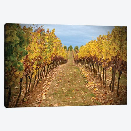 Wine Time Vines I 3-Piece Canvas #SUV217} by Susan Vizvary Canvas Print