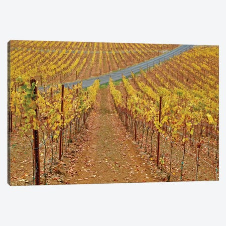 Wine Time Vines II 3-Piece Canvas #SUV218} by Susan Vizvary Canvas Wall Art