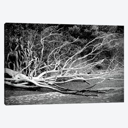 Branch On The Beach In Black And White Canvas Print #SUV219} by Susan Vizvary Canvas Wall Art
