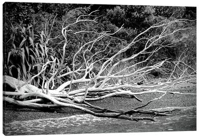 Branch On The Beach In Black And White Canvas Art Print