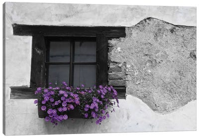 Purple Flower Box In Black And White Canvas Art Print