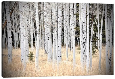 Baby Tree In The Forest Canvas Art Print