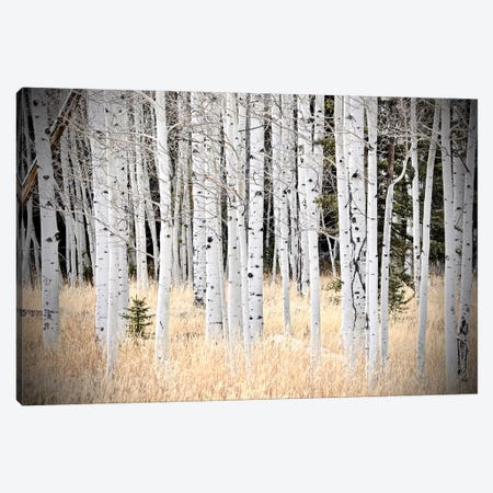 Baby Tree In The Forest 3-Piece Canvas #SUV309} by Susan Vizvary Canvas Wall Art