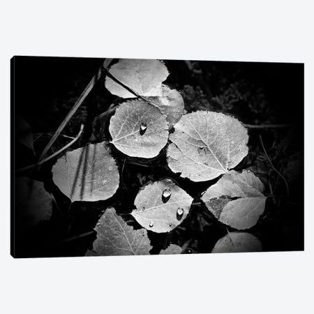 Droplets On Leaves 3-Piece Canvas #SUV311} by Susan Vizvary Art Print