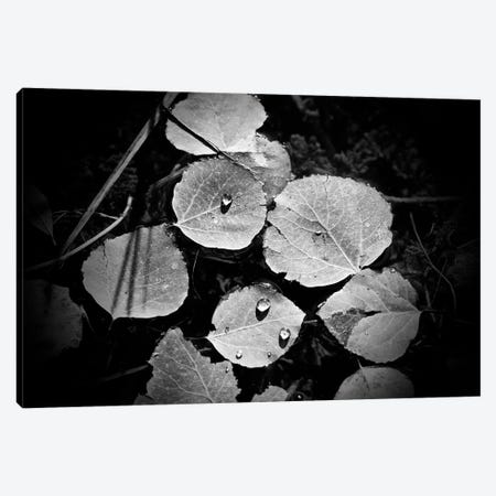 Droplets On Leaves Canvas Print #SUV311} by Susan Vizvary Art Print