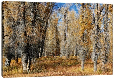 A Field Of Autumn Trees Canvas Art Print