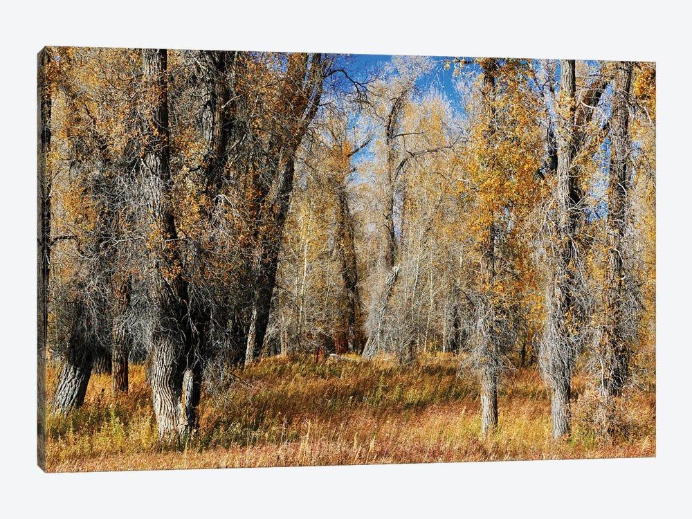 A Field Of Autumn Trees by Susan Vizvary 1-piece Art Print