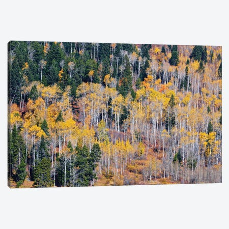 Autumn Layers Of Trees I Canvas Print #SUV334} by Susan Vizvary Canvas Art