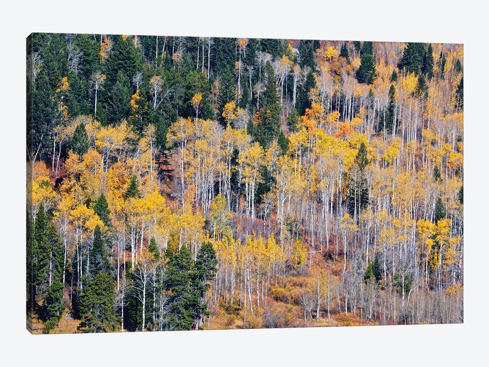 Autumn Layers Of Trees I by Susan Vizvary 1-piece Canvas Print