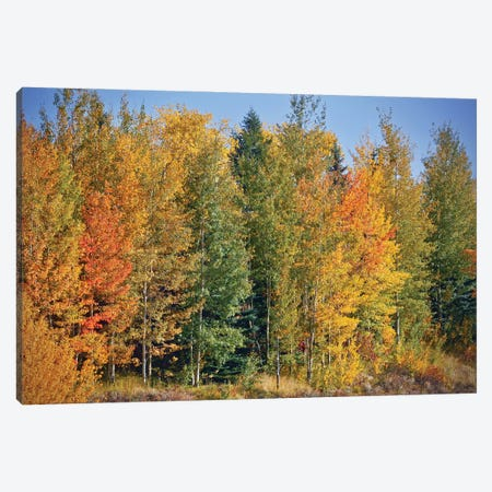 Autumn Layers Of Trees II Canvas Print #SUV335} by Susan Vizvary Canvas Art