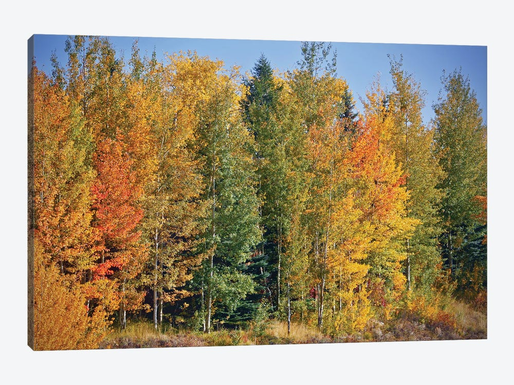 Autumn Layers Of Trees II by Susan Vizvary 1-piece Canvas Art