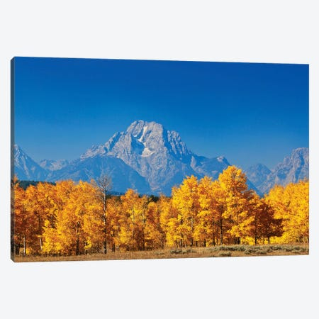 Autumn Trees Grand Tetons Canvas Print #SUV338} by Susan Vizvary Art Print