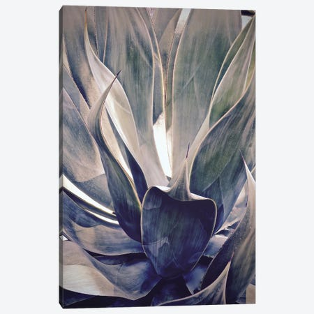 Faded Succulant I Canvas Print #SUV33} by Susan Vizvary Art Print