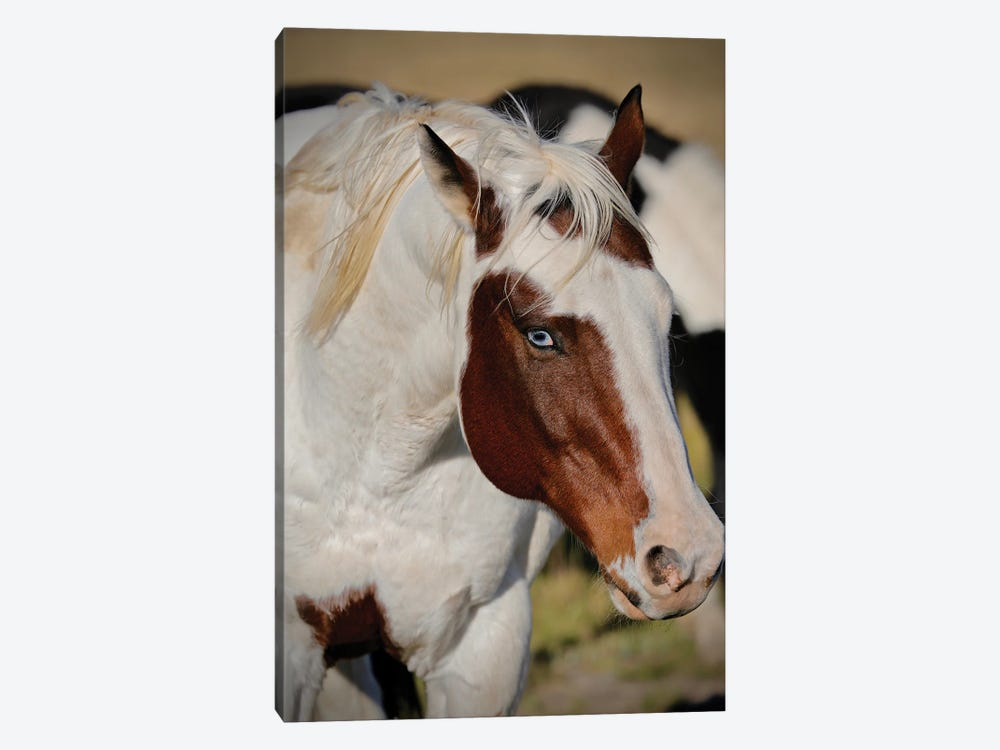 Blue Eyed Beauty I by Susan Vizvary 1-piece Canvas Wall Art