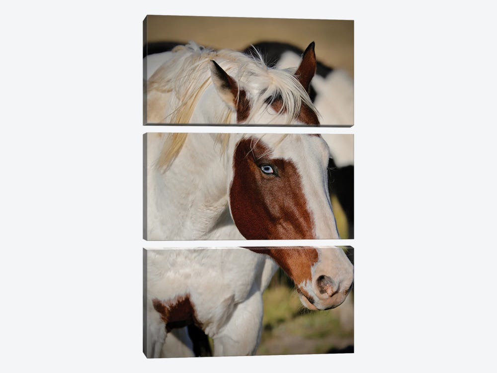 Blue Eyed Beauty I by Susan Vizvary 3-piece Canvas Wall Art