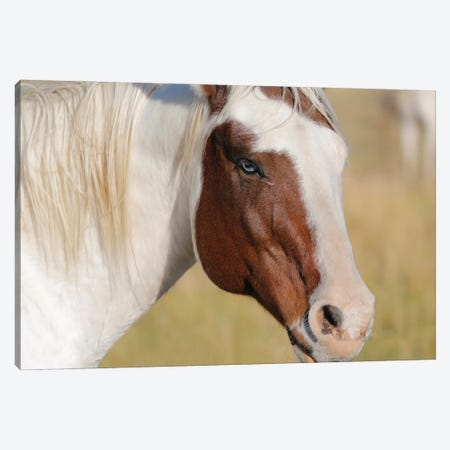 Blue Eyed Beauty II Canvas Print #SUV341} by Susan Vizvary Canvas Art