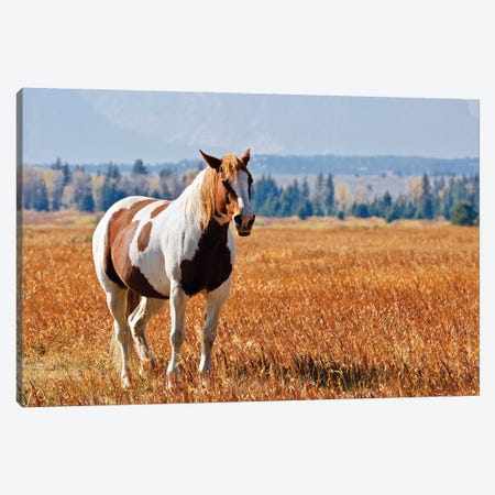 Brown And White Horse Canvas Print #SUV342} by Susan Vizvary Canvas Artwork