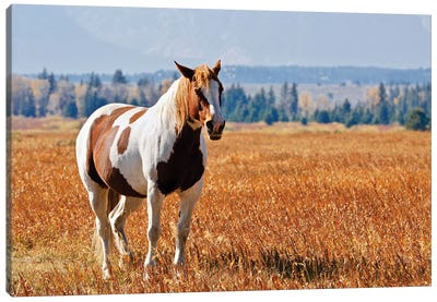 Brown And White Horse Canvas Art Print