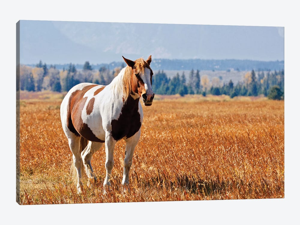 Brown And White Horse by Susan Vizvary 1-piece Canvas Wall Art