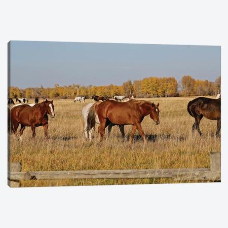 Group Of Horses I Canvas Print #SUV349} by Susan Vizvary Canvas Art