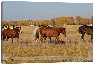 Group Of Horses I Canvas Art Print