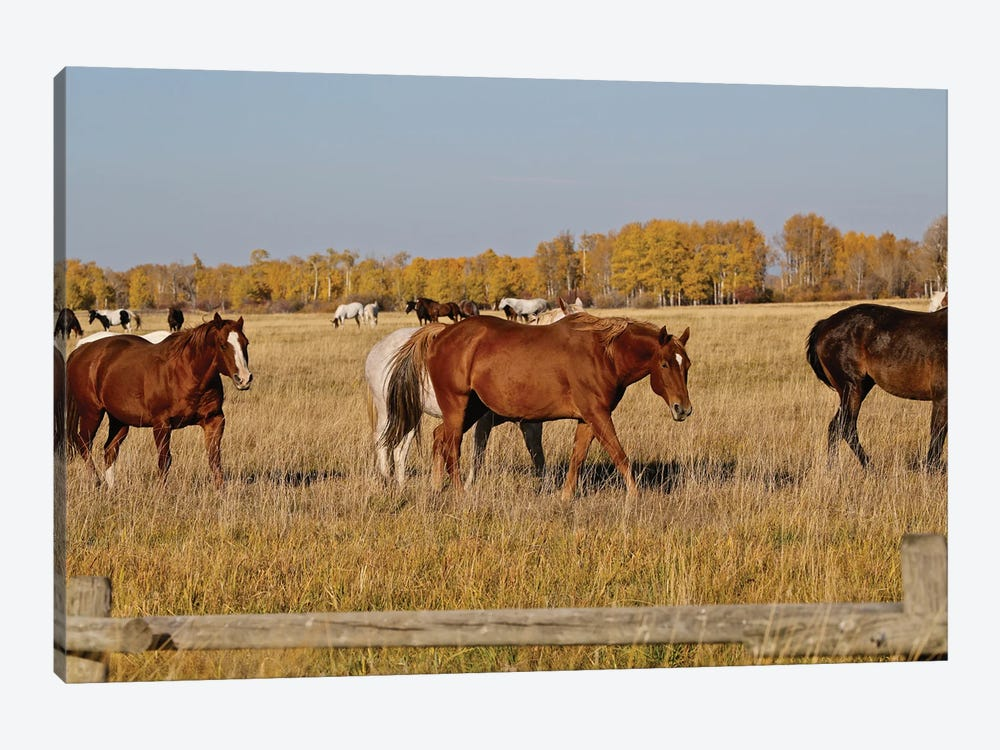 Group Of Horses I by Susan Vizvary 1-piece Canvas Print