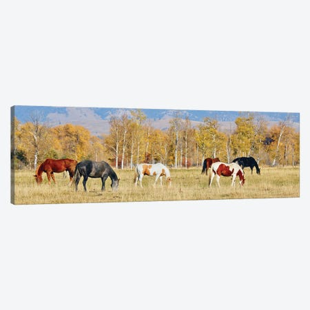 Group Of Horses II Canvas Print #SUV350} by Susan Vizvary Canvas Art Print