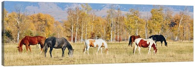 Group Of Horses II Canvas Art Print