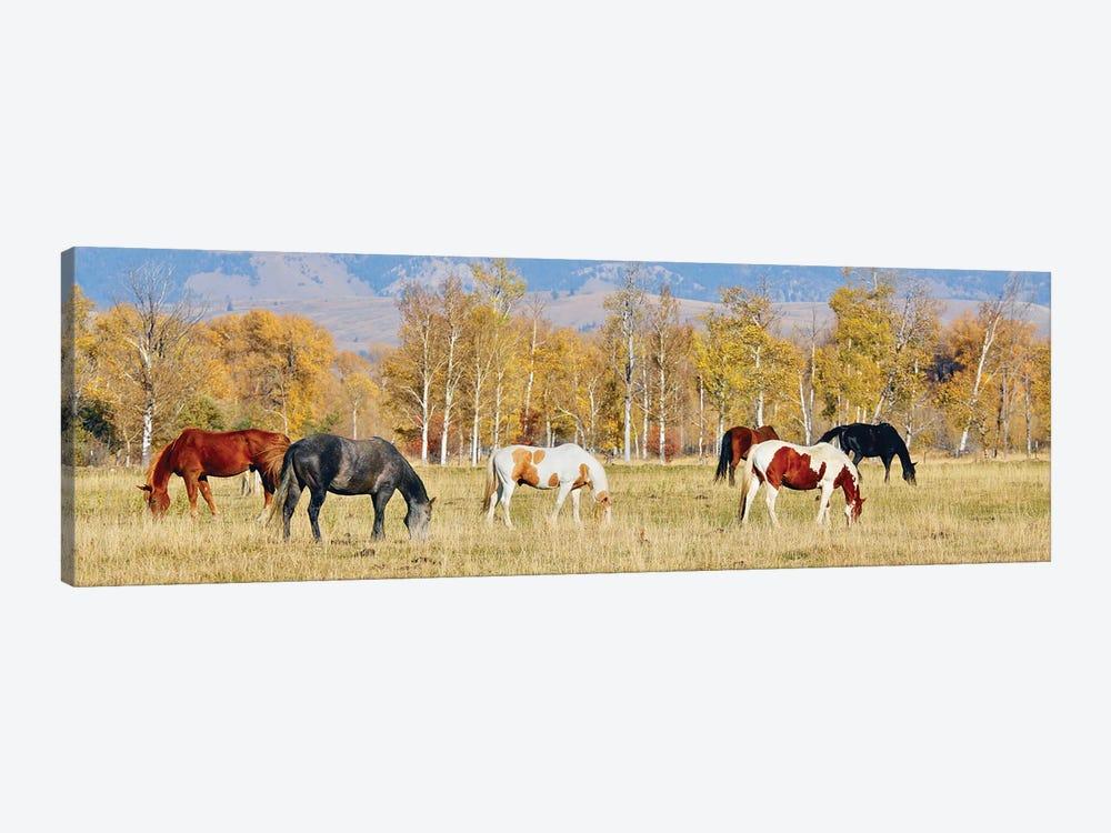 Group Of Horses II by Susan Vizvary 1-piece Canvas Art Print
