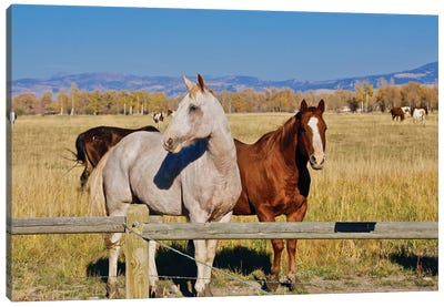 Horse Friends Canvas Art Print