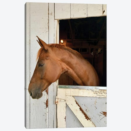 Horse In A Barn I Canvas Print #SUV354} by Susan Vizvary Canvas Wall Art