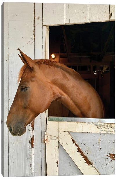 Horse In A Barn I Canvas Art Print