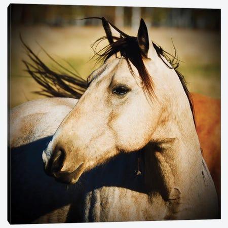 Horse Profile Canvas Print #SUV356} by Susan Vizvary Canvas Art