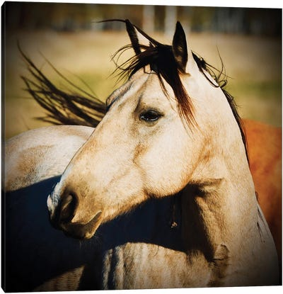 Horse Profile Canvas Art Print