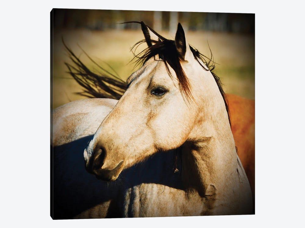 Horse Profile by Susan Vizvary 1-piece Canvas Print