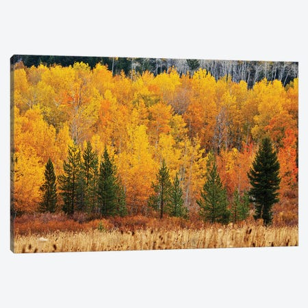 Layers Of Autumn Canvas Print #SUV363} by Susan Vizvary Canvas Art