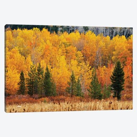 Layers Of Autumn Canvas Print #SUV363} by Susan Vizvary Canvas Art