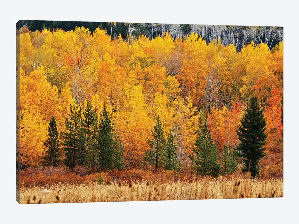 Layers Of Autumn by Susan Vizvary 1-piece Canvas Print