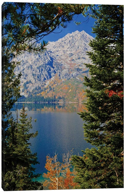 Mountain Through The Trees Canvas Art Print