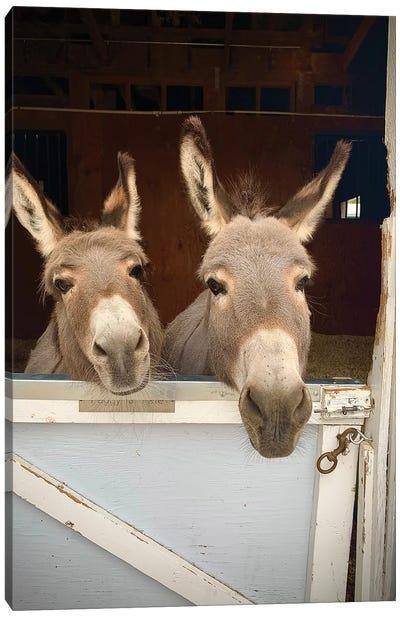 Pair Of Donkeys Canvas Art Print