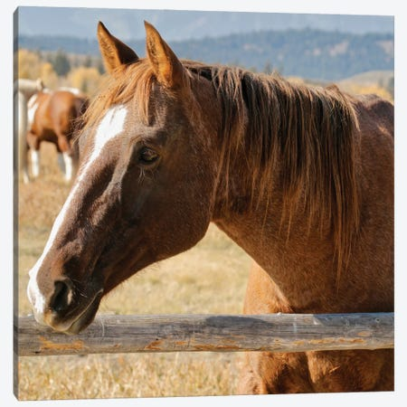 Pointed Ears Horse Canvas Print #SUV374} by Susan Vizvary Canvas Art