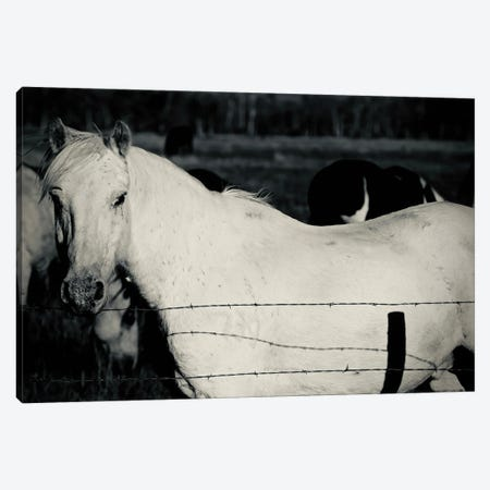 Single Horse In Black And White Canvas Print #SUV375} by Susan Vizvary Canvas Art